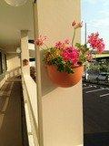 廊下の花ポット
