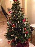 スパ棟クリスマスツリー