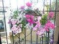 レストランの柵にある花