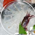 鯛と海老の刺身