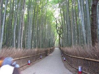 写真クチコミ:竹林