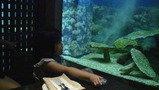 海鮮BBQを食べながら魚を見ました。