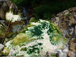 写真クチコミ:露天風呂の外も緑色