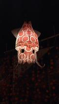 イカの提灯
