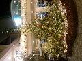 クリスマスツリーで素敵な夜を