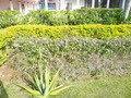 敷地内の庭園