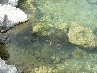 写真クチコミ:ウミガメ