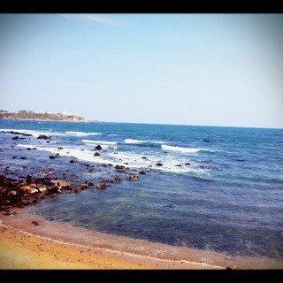 写真クチコミ:The Sprig Sea!