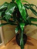 脱衣所観葉植物