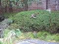 日本庭園にあった京都の大文字山です。