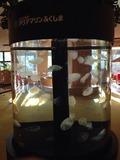 ホテルハワイアンズロビー円形水槽