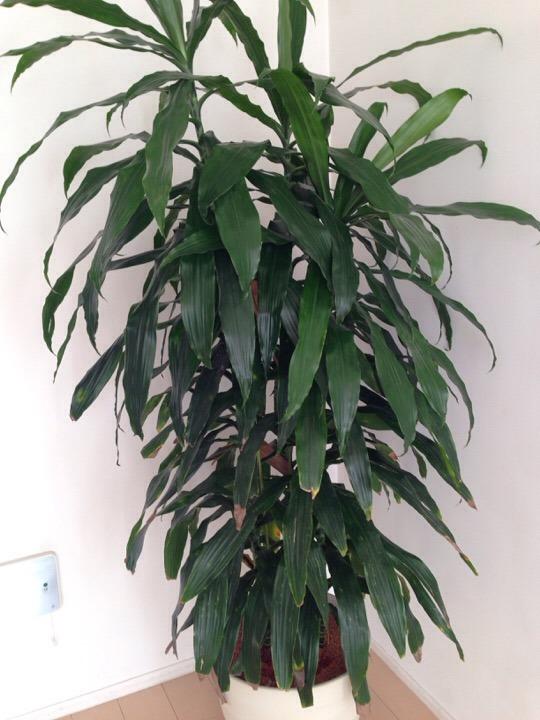 ウィルポート 観葉植物