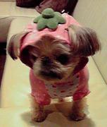 azukkoさんのプロフィール画像