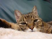 みーちゃん猫さんのプロフィール画像