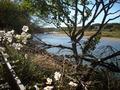 庭先から久慈川