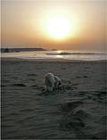 海岸で朝散歩