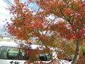 紅葉もきれい