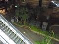 ホテル内に木々