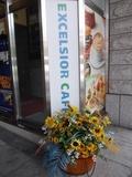 入口付近の花