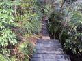森のドッグランへの道