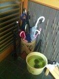傘立てと金魚鉢
