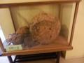 蜜蜂の巣が展示されていました。