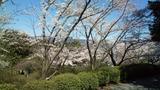 桜の先には玄海灘も見れます