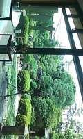 綺麗な中庭