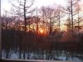 木々の間からの朝日です。