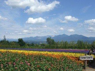 美瑛「ぜるぶの丘」 虹の絨毯のよう!