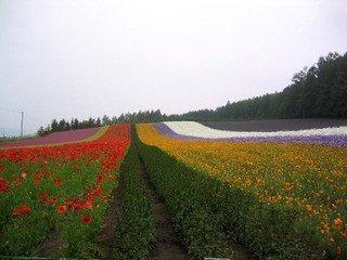 ファーム富田を代表する畑『彩りの畑』