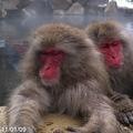 地獄谷野猿公苑見学にも行ける温泉宿