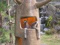 サファリパークのワオキツネザル