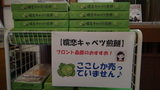 嬬恋プリンスホテルのお土産物「嬬恋キャベツ煎餅」