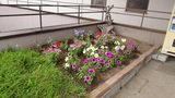 はぼろ温泉サンセットプラザの綺麗な花壇