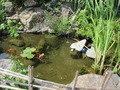 小さな池には…