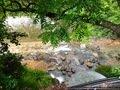 宿の裏を流れる川