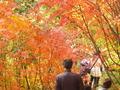 秋の黒部平(黒部平高山植物園)