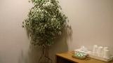 観葉植物。(ジム内)