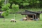 「風のガーデン」の羊の広場