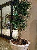 ロビーの植物