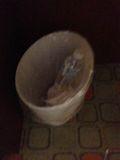 ゴミ箱 写真です。