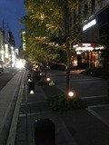 ホテル前の観葉植物が素晴らしいです。