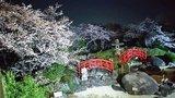 庭園の夜桜