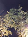 ホテル入り口に大きな木があり雰囲気が出まくりでした!