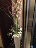入り口の観葉植物です。
