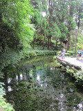 周辺観光:白川水源へ行ってきました。