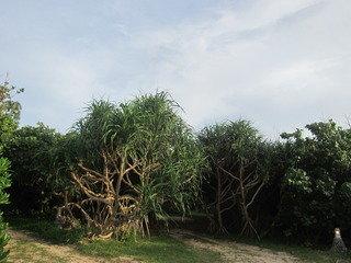 フサキガーデン、亜熱帯の植物を見ながら散策できます。