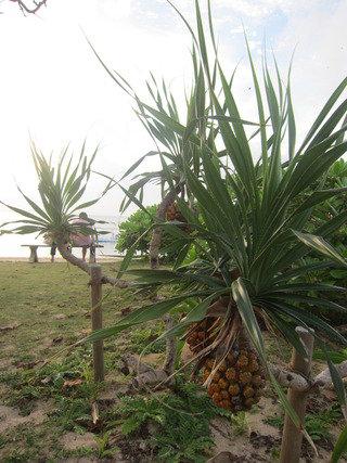 ビーチすぐのところにも亜熱帯の植物がありました。