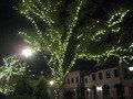 ポルトヨーロッパのまわりの木のイルミ